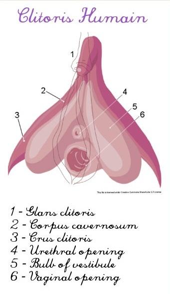21 choses que toute personne avec un clitoris devrait
